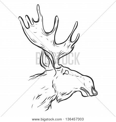 Hand drawn graphic moose.Vintage line deer label. Retro vector design graphic element, badge, emblem, logo. Moose head in profile with big horns.vector silhouette moose on white background