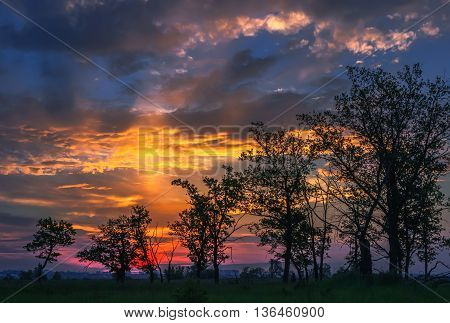 Silhouettes of the rising series of trees on the background fantastic colorful shining cloudy sky at sunset.