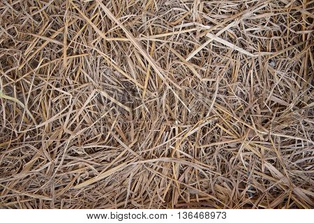 closed up the group of straw in a farm
