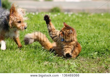 A tabby cat swiping a paw at a playful terrier dog