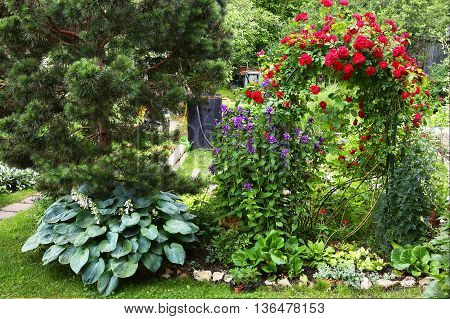 beautiful designed formal summer garden with pine tree red rose bush and decorative plants and flowers