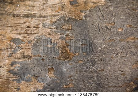 natural old wood background closeup,  wood, grunge