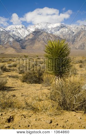 Desert Plant With Moutntains In The Background