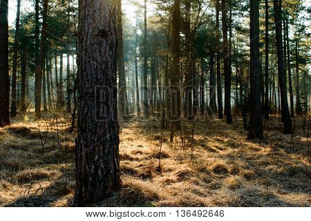 Sunlight shining through various trees in autumn forest with clumps of grass flatted with frost