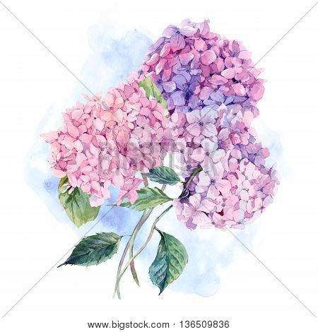 Summer Watercolor Vintage Floral Greeting Card with Blooming Hydrangea, Watercolor botanical natural hydrangea Illustration isolated on white poster