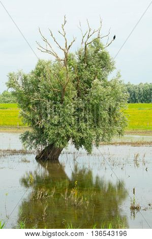 Tree coming out of the water in a swamp area next to a lake