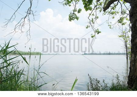 Lakeside landscape as see from between the trees and the grass