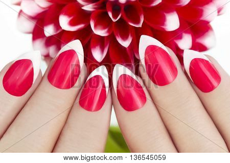 Red French manicure with dahlias on a white background closeup.
