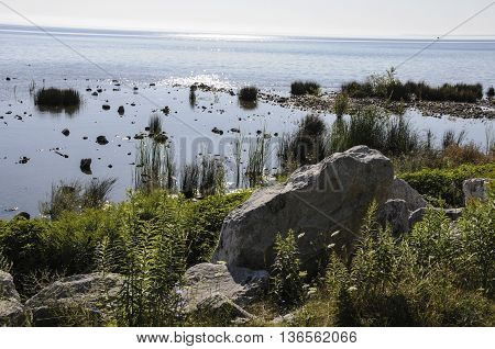 A view of Mackinac Island shoreline showing a rocky base and plant life.