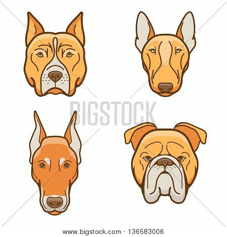 Dog faces of various breeds dobermann, bulldog, pitbull, Pit Bull Terrier