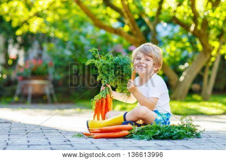 Funny blond little kid boy with carrots in domestic garden. Child gardening and eating outdoors. Healthy organic vegetables as snack for kids and kindergarten children