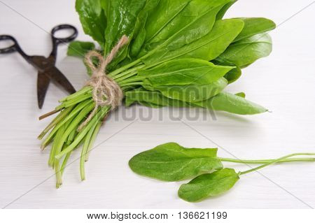 Fresh green sorrel/spinach/salads. Selective focus. Healthy food concept. poster