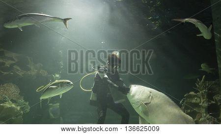 scuba diver feed fish in water tank aquarium