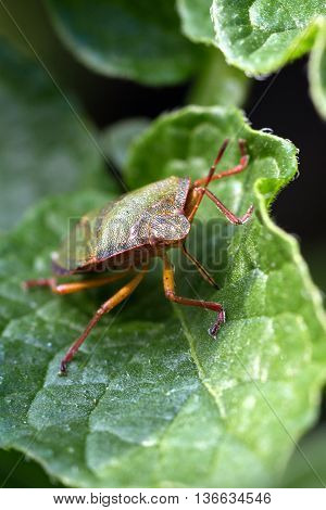 Green bug sitting on a green leaf
