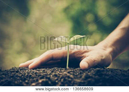 Hands growing and nurturing tree growing on fertile soil with green and yellow bokeh background / nurturing baby plant / protect nature