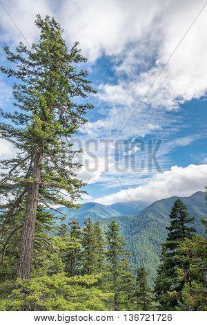 Mountain vista from Hurricane Ridge Road in Olympic National Park, near Port Angeles, Washington.