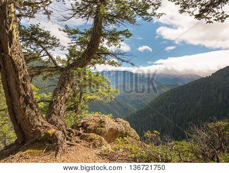 Sunny mountain vista from Hurricane Ridge Road in Olympic National Park, near Port Angeles, Washington.