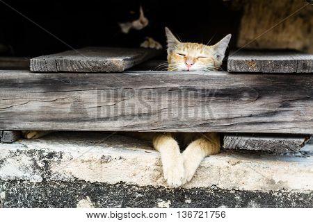 Cat asleep behind the wooden panels .