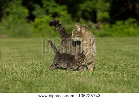 Cute Tabby And Kitten