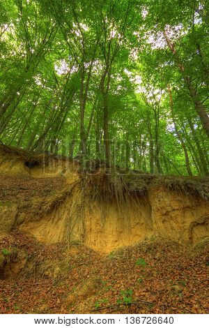 Sandy scarp inside beech forest. Poland, Holy Cross Mountains.