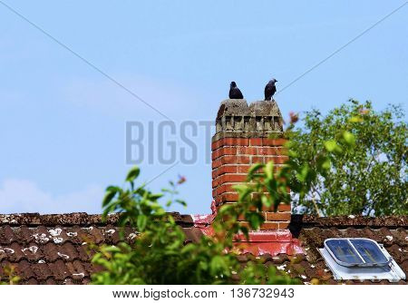 Jackdaw couple on a chimney of a house