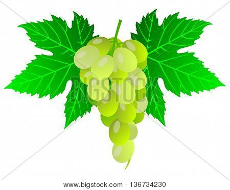 grape ,bunch of grapes , bunch of grapes and leaves