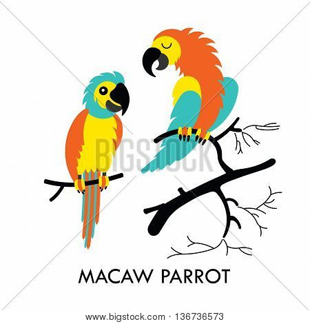 Cartoon african Macaw birds. Vector cartoon african Macaw birds made in flat style. Isolated wild african parots Cartoon wild african parrots background. Vector african Macaw Parrot.