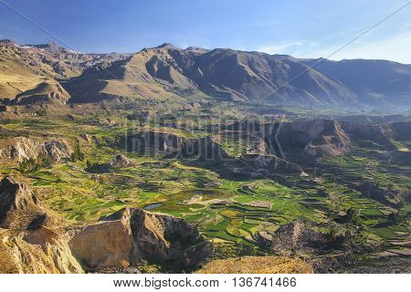 Stepped Terraces In Colca Canyon In Peru