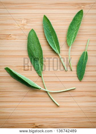Closeup Fresh Sage Leaves  On Wooden Background. Alternative Medicine Fresh Salvia Officinalis. Fres