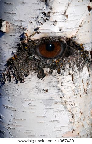 Surreal Willow Eye