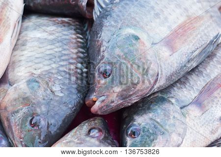 fresh Nile Tilapia fish for sale - food