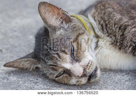 Cat sleeping on the ground concrete, animal
