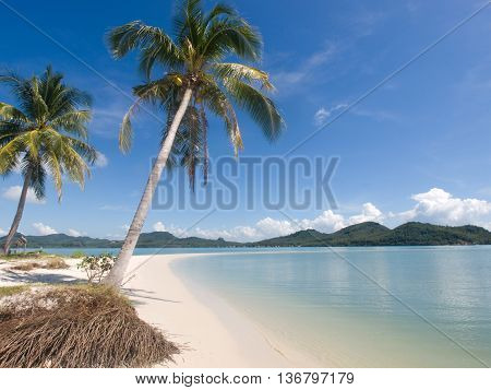 Coconut trees at the seaside on a tropical island