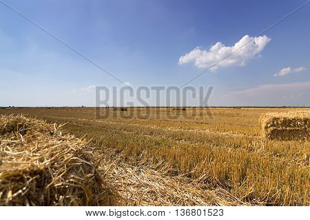 Field of straw bales. Bale of straw in a yellow landscape. Straw field blue sky. Square straw Bale. Selective focus and shallow Depth of field