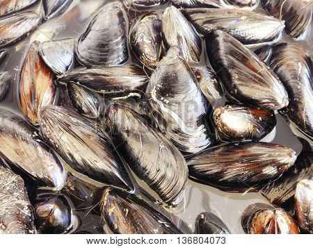 mussels to eat in the kitchen at home