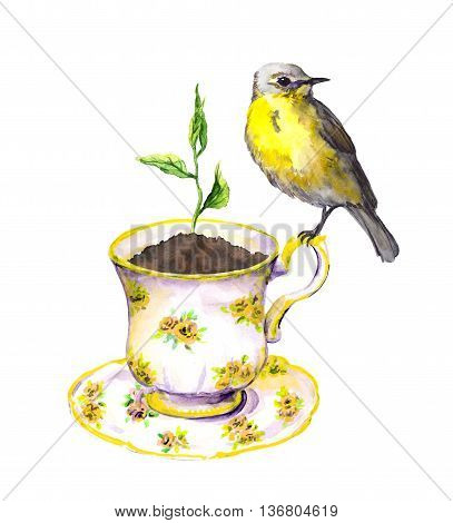 Bird and spring sprout - green growing plant in tea cup. Vintage watercolor