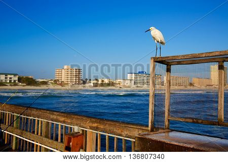 Daytona Beach in Florida shore from pier and sea bird USA