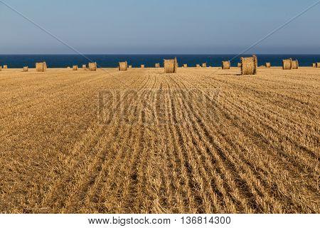 Rural landscape: hay rolls on mown wheat field on blue sky background - near the sea coast of Larnaca Cyprus.