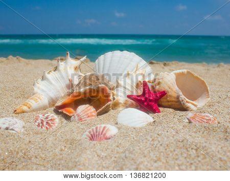 Seashells on the sand, sea and blue sky.