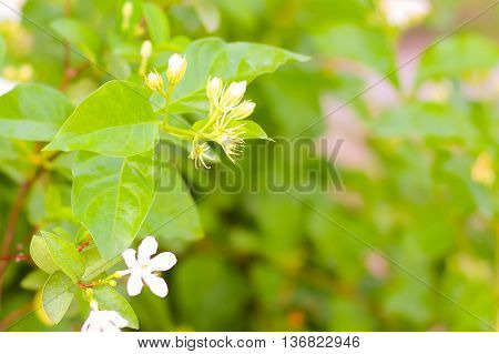 Green leaves and flowers in the morning background .