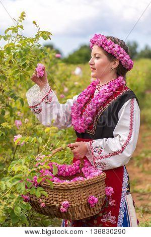 Girl Picking Roses