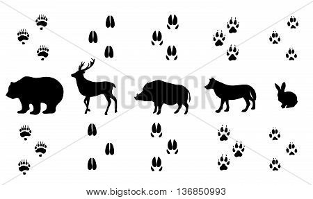 Vector set of walking wild wood animal tracks