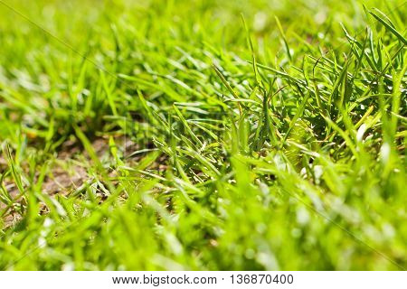 Juicy Grass On The Lawn