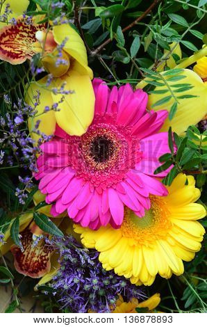 gerbera flower. orchid flower. flower wedding decoration, beautiful gerbera flower background