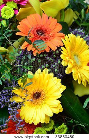 Flower background with colorful summer flowers closeup