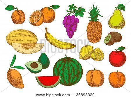 Sweet aroma mango, peaches and melon, banana, orange and apple, violet grapes, pineapple and lemon, pear, apricot and watermelon, avocado and kiwi fruits sketch symbols