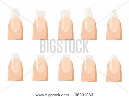 Types of fashion Different nail shapes - Fingernails fashion Vector illustration.