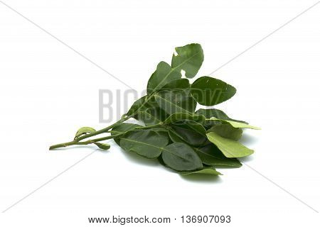 Kaffir lime leaves Used for Tom Yum Goong and Thai food