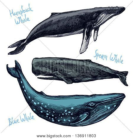 Whales Set, Collection Of Different Color Hand Drawn Whales
