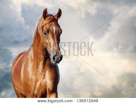 chestnut arabian horse portrait against the cloudy skies